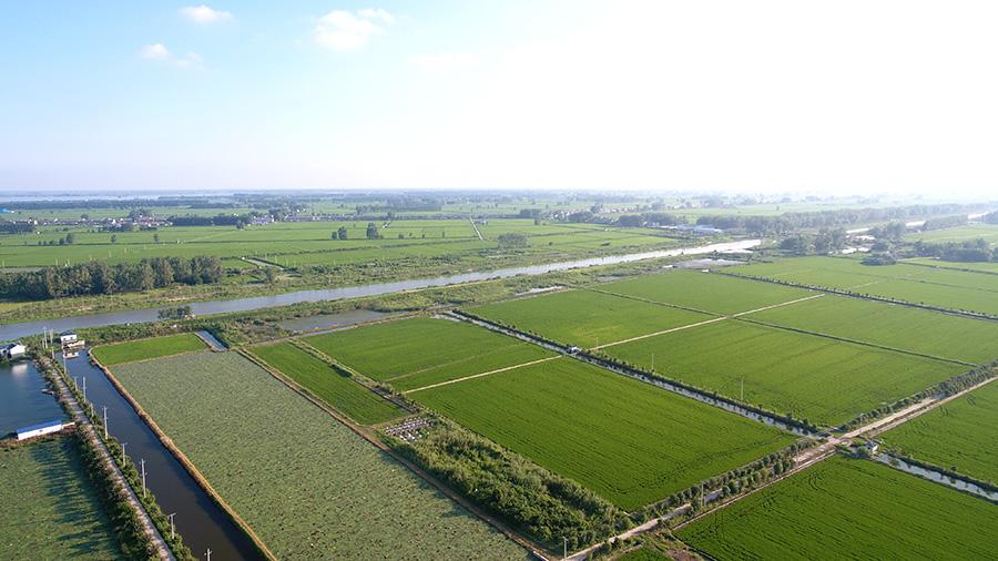 白马湖有机稻米种植基地
